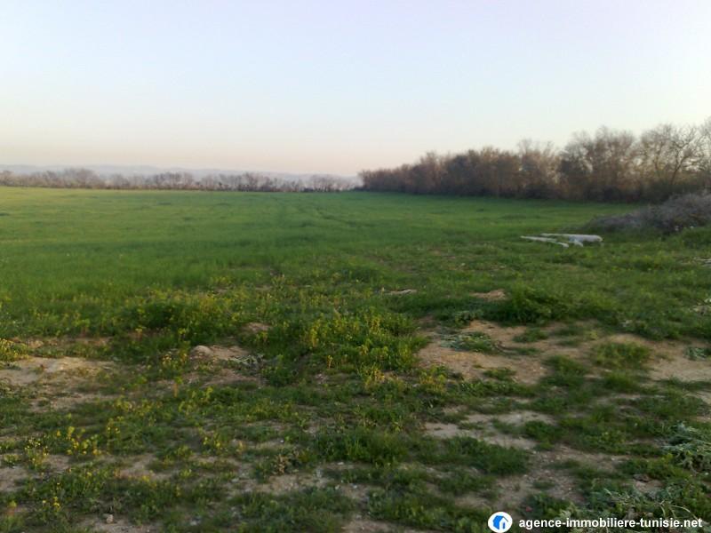 Terrain agricole a vendre for Agrandissement maison terrain agricole