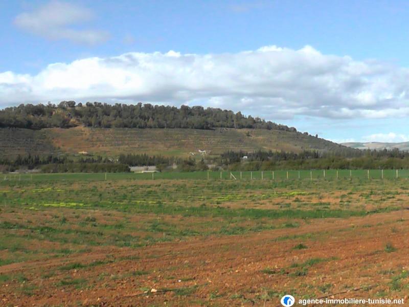 Terrain agricole plant a jedaida for Construction terrain agricole